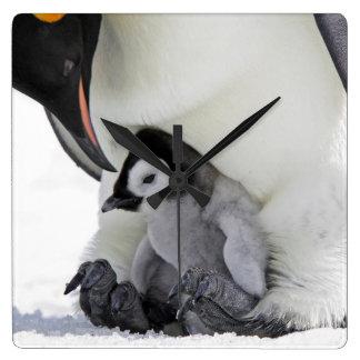 Schnee-Hügel-Insel des Kaiser-Pinguin-  Quadratische Wanduhr