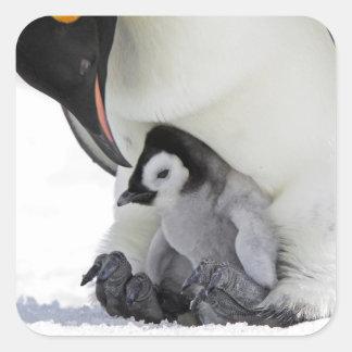 Schnee-Hügel-Insel des Kaiser-Pinguin-| Quadratischer Aufkleber