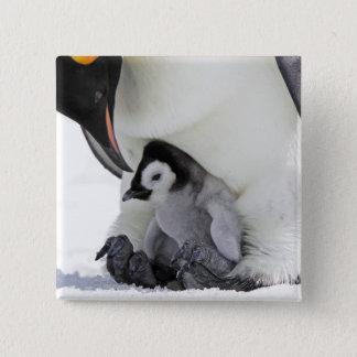 Schnee-Hügel-Insel des Kaiser-Pinguin-| Quadratischer Button 5,1 Cm