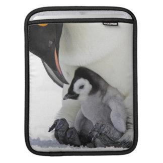 Schnee-Hügel-Insel des Kaiser-Pinguin-| Sleeve Für iPads
