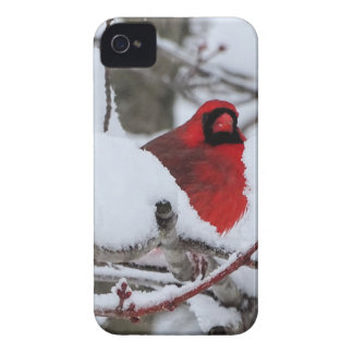 Schnee-Kardinal iPhone 4 Hülle