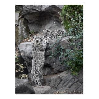 Schnee-Leopard-Mutter und CUB Postkarte