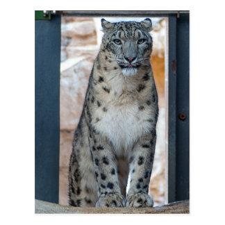 Schnee-Leopard Postkarte