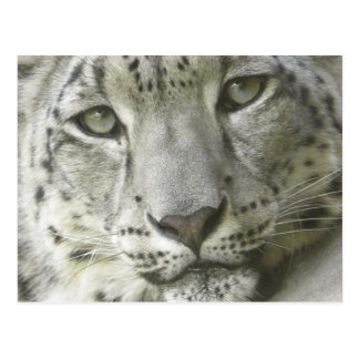 Schnee-Leopard-Postkarte Postkarte