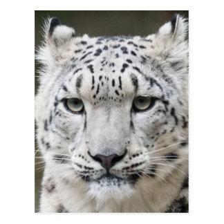 Schnee-Leopard Postkarten