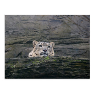 Schnee-Leopard-Stillstehen Postkarte