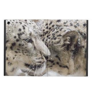 Schnee-Leopard-Umarmung