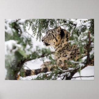 Schnee-Leopard unter Snowy Bush Poster
