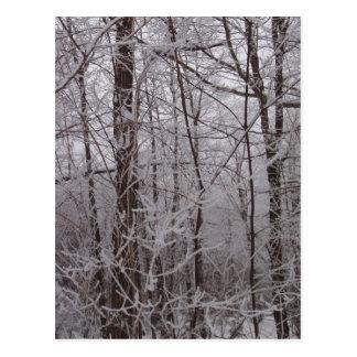 Schnee-mattierte Neu-England Bäume Postkarte
