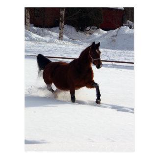 Schnee-Pferd Postkarte