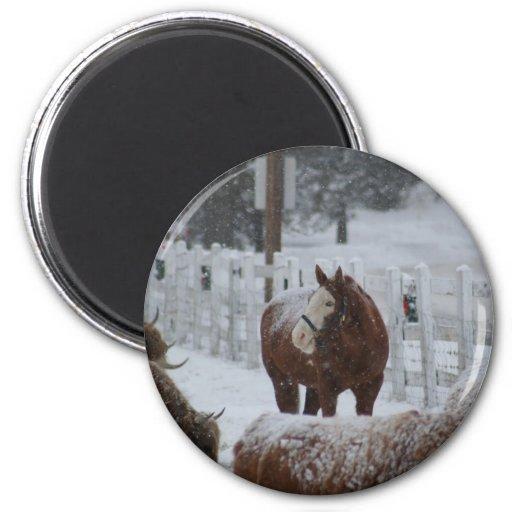 Schnee-Pferd, Rosies Tasse Kühlschrankmagnet