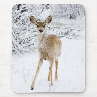 Schnee-Rotwild Mauspad
