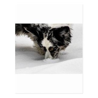 Schnee-SchnauzeCorgi Postkarte