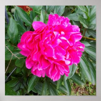 Schneeball-Blume Poster