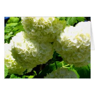 Schneeball-Bush-Blüte Karte