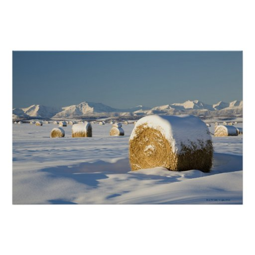Schneebedeckte Heu-Ballen Plakatdrucke