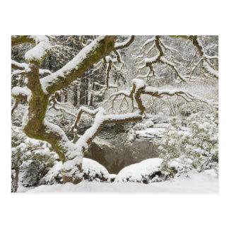 Schneebedeckter japanischer Ahorn Postkarte