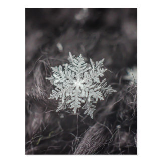 Schneeflocke-Schichten - Makro Postkarte