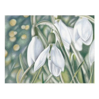 Schneeglöckchen - Farbstiftzeichnung Postkarte