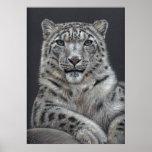 Schneeleopard - Snow Leopard Poster