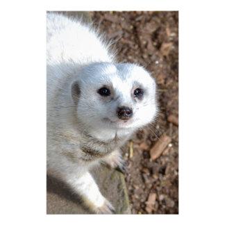 Schneewittchen das Meerkat, Briefpapier