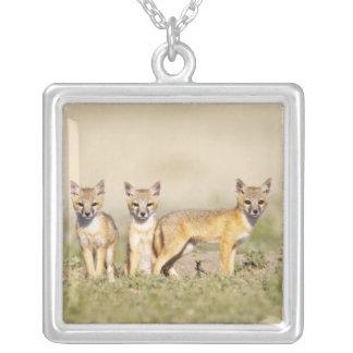 Schnelle Junge Fox (Vulpes Macrotis) an der Höhle Versilberte Kette