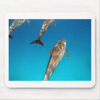 Schnorcheln mit Delphinen Mousepad
