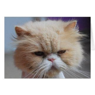 Schnurren-fect persische Katzen-Gruß-Karte Karte
