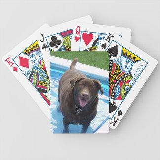 Schokolade Labrador, das Spaß in einem Bicycle Spielkarten