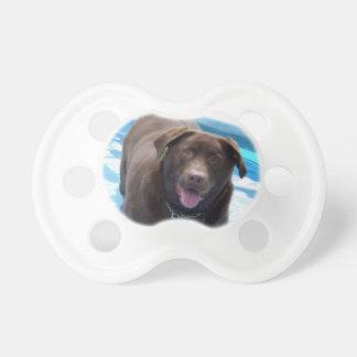 Schokolade Labrador, das Spaß in einem Schnuller