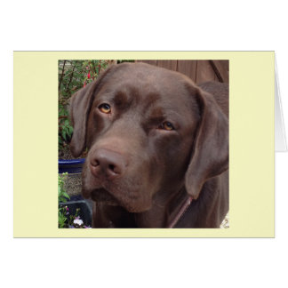 Schokolade Labrador Karte