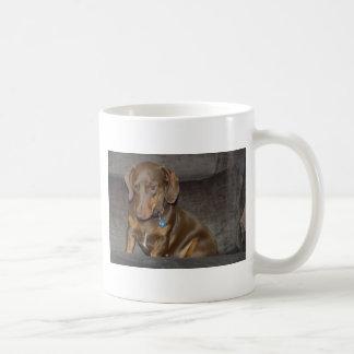 Schokoladen-Dackel Kaffeetasse