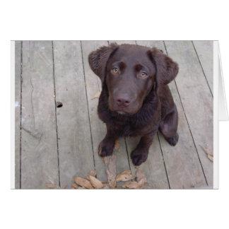 Schokoladen-Labrador Karte