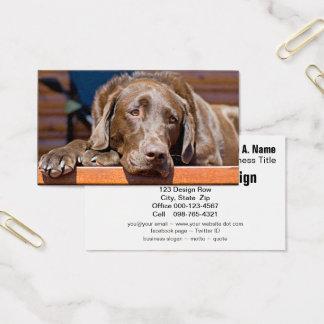 Schokoladen-Labrador retriever-Fotografie Visitenkarte