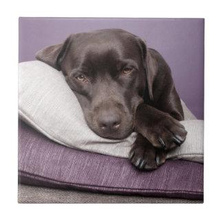 Schokoladen-labrador retriever-Hund ermüdet auf Keramikfliese