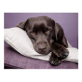 Schokoladen-labrador retriever-Hund schläfrig auf Postkarte