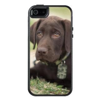 Schokoladen-Labrador-Welpe OtterBox iPhone 5/5s/SE Hülle