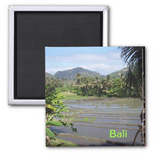 Schöne Bali-Reispaddys Kühlschrankmagnet
