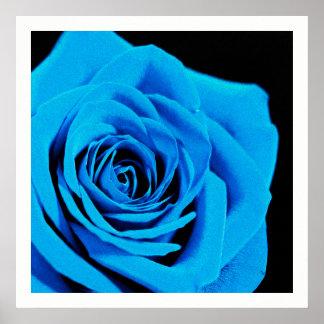 Schöne blaue Rose Poster