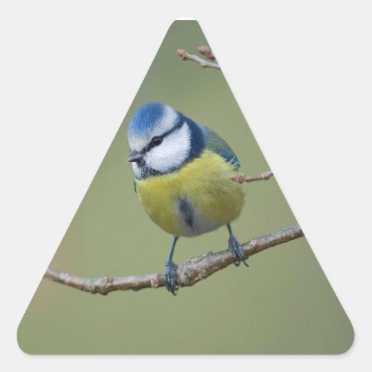 schöne Blaumeise auf Ast sitzend Dreieckiger Aufkleber