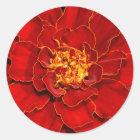 Schöne Durango-Rot-Ringelblume Runder Aufkleber