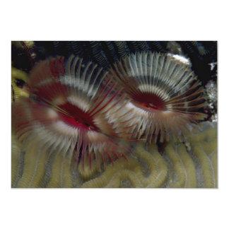 Schöne Fanwürmer schmücken ein karibisches Koralle Ankündigungskarte