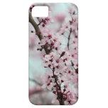 Schöne Frühlings-Kirschblüte Hülle Fürs iPhone 5