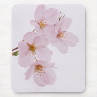 Schöne Frühlingskirschblüten in Tokyo Mauspads