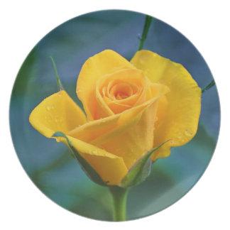 Schöne gelbe Rose Teller