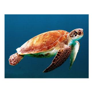 Schöne grüne Meeresschildkröte Postkarte