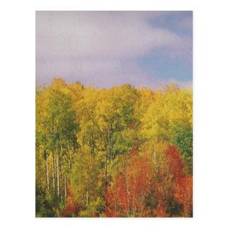 Schöne KANADISCHE Herbstsaison: BILLIGgeschenke Postkarten