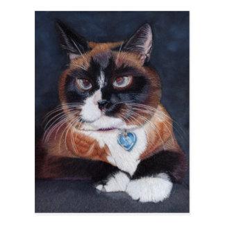 Schöne Katze Postkarte