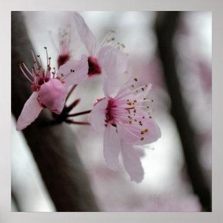 Schöne Kirschblüten-Blumen Poster