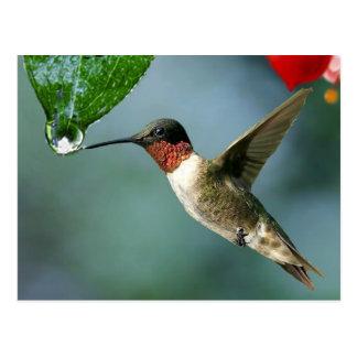 Schöne Kolibri-Natur-Landschaft Postkarte